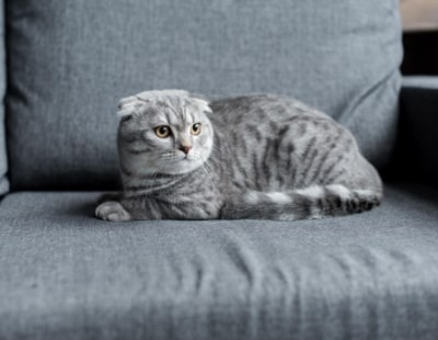 Lets with pets – pet-friendly rental property searches spike
