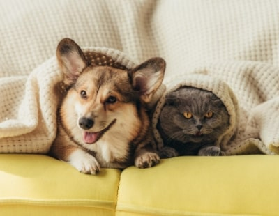 Pawfect news: fresh wave of pet-friendly rentals coming to market